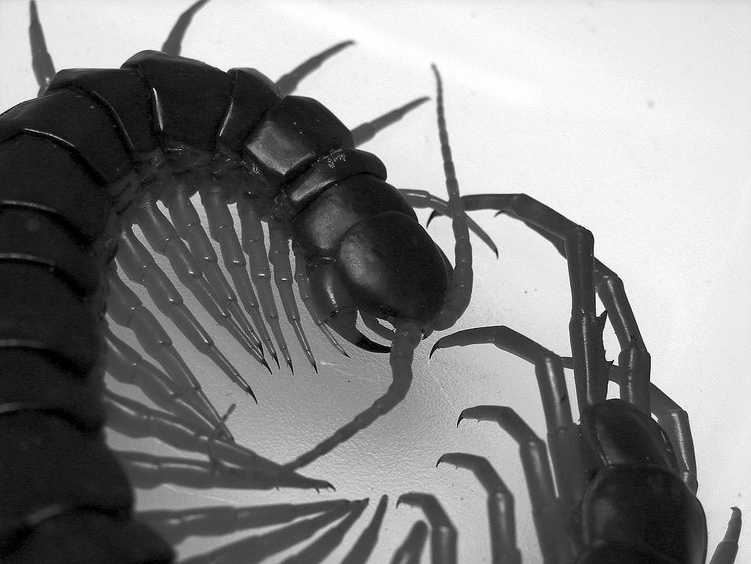 異種姦【触手蟲獣妖機械人外】総合スレ133匹目YouTube動画>2本 ニコニコ動画>1本 ->画像>168枚